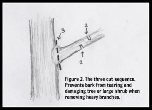 basic pruning technique 2, pruning, proper pruning