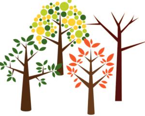 four seasons, pruning, proper pruning