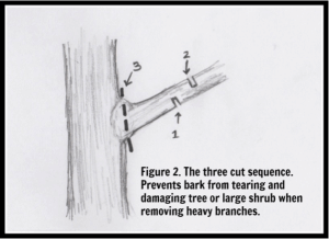 basic pruning technique 2, pruning, proper pruning