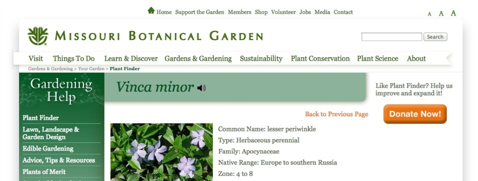 Plant Names, Vinca, Missouri Botanical Gardens